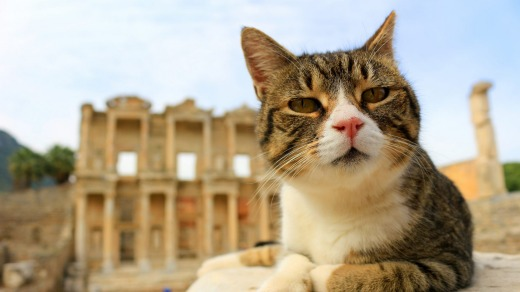 A cat sits on a pillar in the ancient city of Ephesus.
