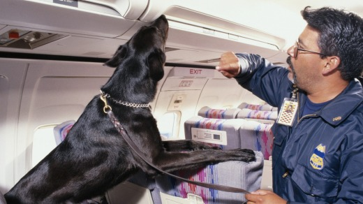 Studies have shown that drug-detection dogs get it wrong almost 75 per cent of the time.