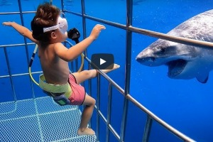 YouTube stars The Bucket List Family have been criticised for putting their five year old son in a shark cage. YouTube ...