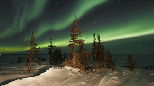The Northern Lights (Aurora Borealis) in late winter in Churchill, Manitoba.