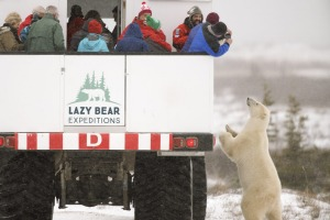 Lazy Bear's tour company Lazy Bear Expeditions gets you out and about seeing the real thing.