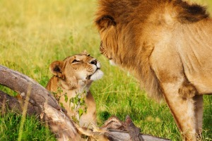 Get up close and personal with African wildlife.
