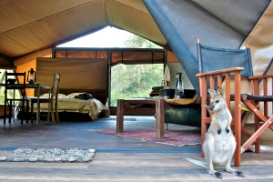 A visitor at Nightfall glamping camp.