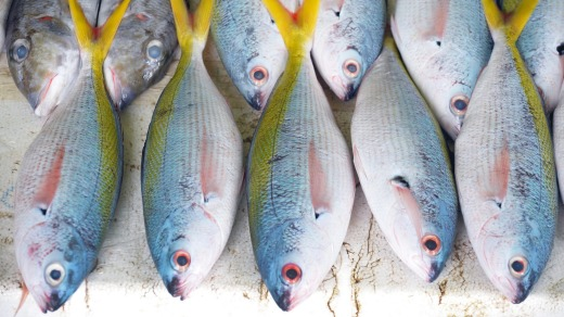 Rows of brightly coloured fish displayed for sale in a Male fish market.