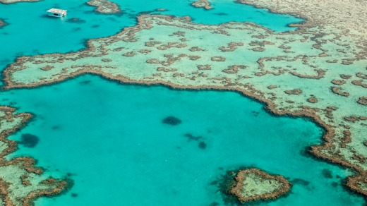 It has taken 10 years for Hamilton Island Air to get permission to anchor a pontoon 300 metres from the famous reef.