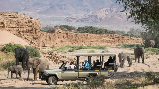 Damaraland elephants.