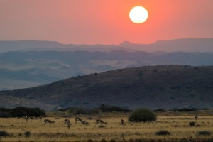 Antelopes at sunset.