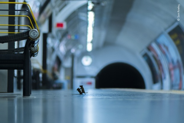 LUMIX People's Choice Award Winner: Station squabble by Sam Rowley, UK. Sam discovered the best way to photograph the ...