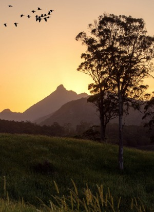 Sunset view of Mt Warning.