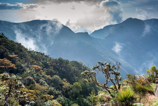 Beautiful foggy landscape viewed from the edge of famous sheer cliff World's End in Horton Plains National Park, Sri ...