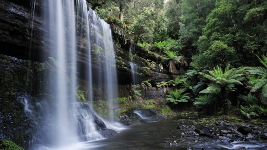 Russell falls in the Mt field national park, Tasmania.