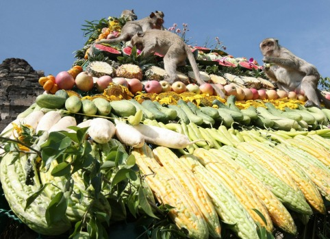 Food is left for the macaques during the annual Monkey Festival in the Thai town of Lopburi.