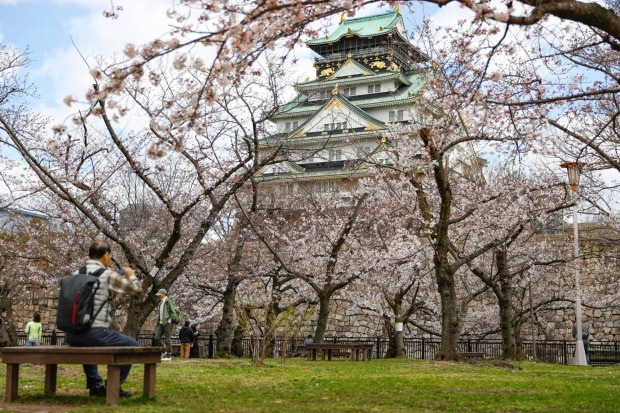 Osaka Castle Park is deserted in the western Japan city as people are asked to refrain from going out for cherry blossom ...