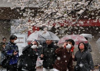 Visitors are viewing and taking photos of cherry blossoms in unseasonably late snowfall in Tokyo, Japan, while Tokyo ...