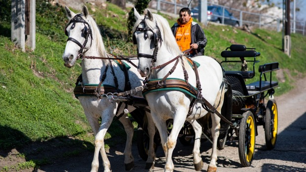 With no tourists, Vienna's famous horse-drawn carriages are now delivering 250-300 meals a day to those in lockdown.