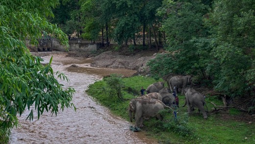 The herd take a rest on the shore of a river.
