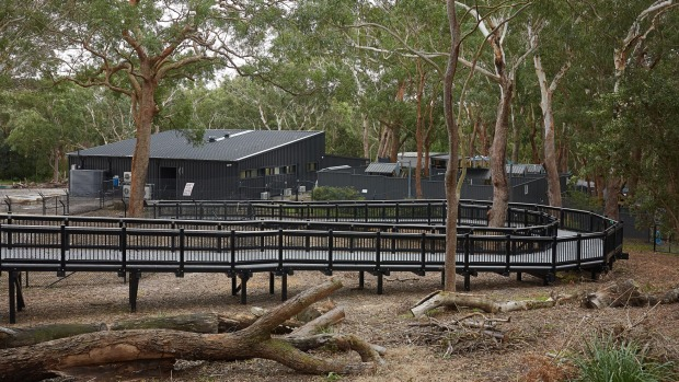 The Port Stephens Koala Sanctuary is Australia's first multi-purpose koala facility.