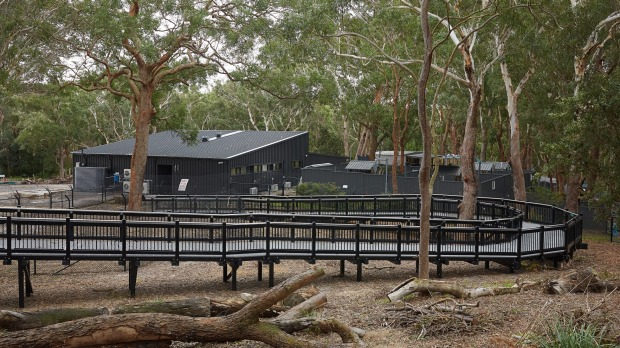 Koala Sanctuary Port Stephens will officially open next week.