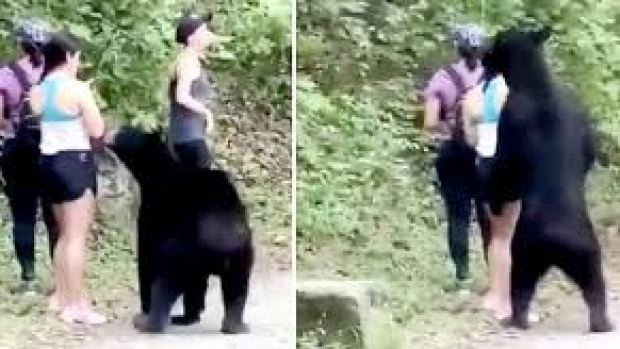 The hiker seems unusually calm during the interaction with the black bear.