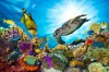 The Great Barrier Reef, Queensland: The dirty little secret about coral reefs is that most parts of them are fairly ...