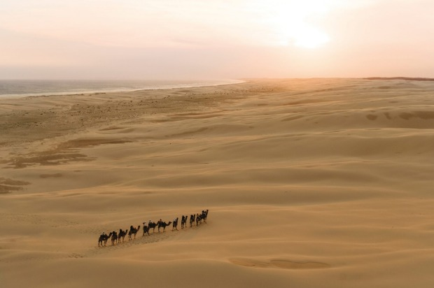 Sunset camel riding experience with in Anna Bay, Port Stephens.