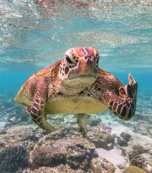 'Terry the Turtle flipping the bird'.