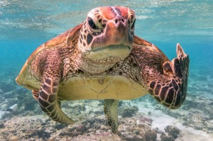 Mark Fitzpatrick's award-winning photo of Terry the Turtle.