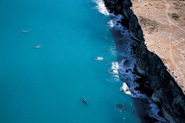 Head of Bight, South Australia: As the Great Australian Bight bends in like the top of a boomerang, there's seemingly ...