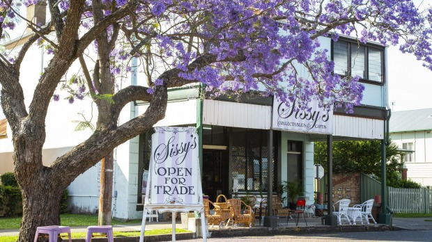 Jacarandas outside of Sissy's Collectibles store in Grafton, NSW.