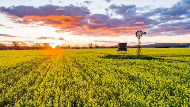 Canola fields, Cowra: As far as scenic road trips go, it's hard to beat Central NSW where paddocks turn to green and ...