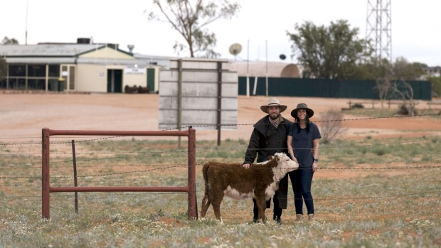 James Fildes with his wife Melanie and their pet calf Yummo, one of two couples who run the Cameron Corner Store at ...