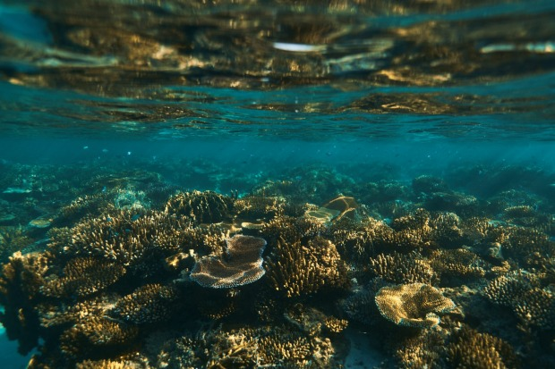 """Fiji: """"It has some of the healthiest reefs and clearest waters I've ever seen."""""""