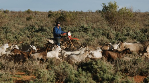 Beset by a prolonged drought and poor prices for sheep meat and wool, the sale of goats has helped fund vital deliveries ...