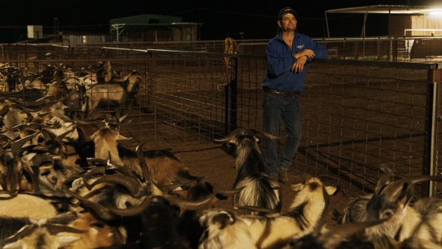 """""""Goats were once considered worthless pests,"""" says John Blore of Silverton Goats."""