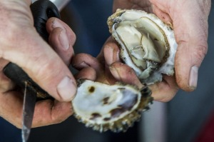 Sydney Rock Oysters' incredibly strong adductor muscles help them stay fresh longer than other species.