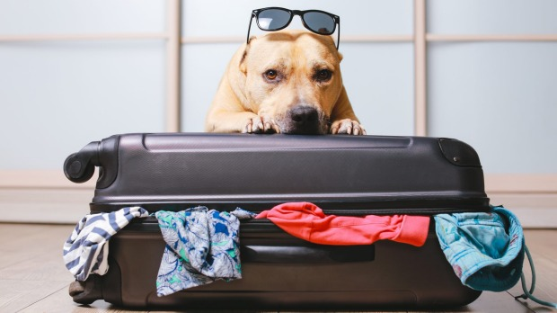 Dog ownership has surged during the pandemic, but our furry friends can make going on holidays complicated.