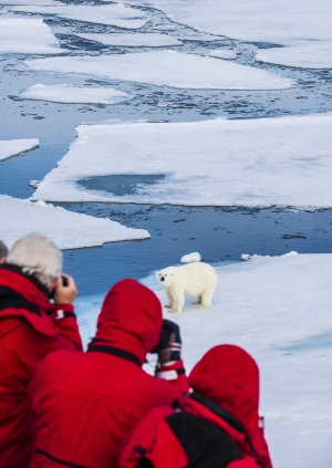 Passengers spot a polar bear on an ice floe in the Arctic shelf on an expedition cruise to Svalbard, Norway.