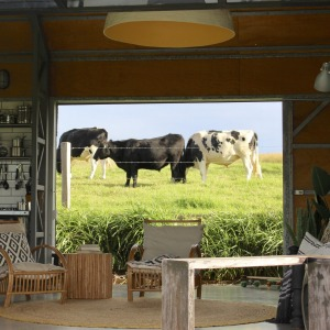 Marvel at the view of rolling lawns, lush pasture and a cow or three at The Shed.
