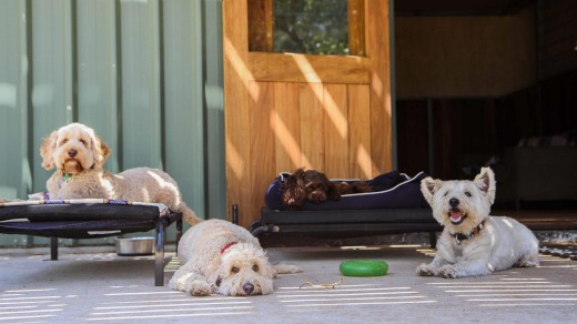 Meeting new friends at Dogue Country Retreat.