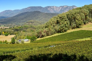 Bright sits in the heart of the Alpine Valleys wine region.