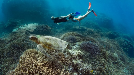 Snorkelling in the lagoon is best done around the top of the tide.