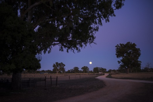 Bellwether Wines provides dining, wine-tasting, music, glamping and camping in the heart of the Coonawarra wine region, ...