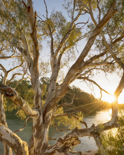 The sun sets over the Murray River in Pericoota, NSW.