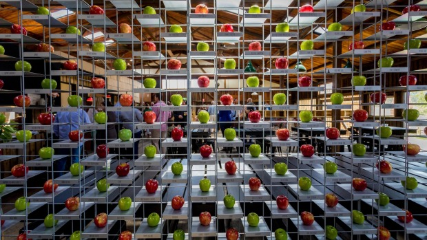 Willie Smiths Apple Shed includes a gorgeous display of almost 400 apple varieties.