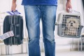 little dog in the airline cargo pet carrier at the airport after a long journey iStock image for Traveller. Re-use permitted.