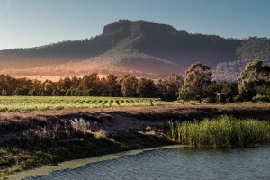 Located in the tranquil, less-visited subregion of Broke Fordwich, Margan is an elegant European-style winery with an ...