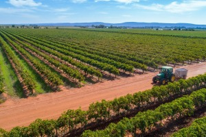 One winery filling the region's food and wine gap is Yarran Wines at Yenda, a short drive from town.