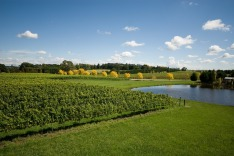 """A view of a vineyard, growing cold-climate wines, near Sutton Forest, on the Southern Highlands of New South Wales, ..."