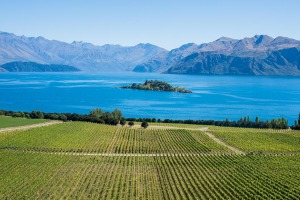Rippon is one of the prettiest vineyards you'll ever see.