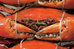 Supplied PR image for Traveller. Walkabout Adventures, Queensland. Mud crabs. Ben Groundwater story on Chef's Table ...